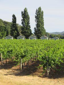 Vineyard Houses
