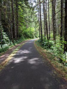 Sun Dappled Trail